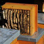 Bienenwissen